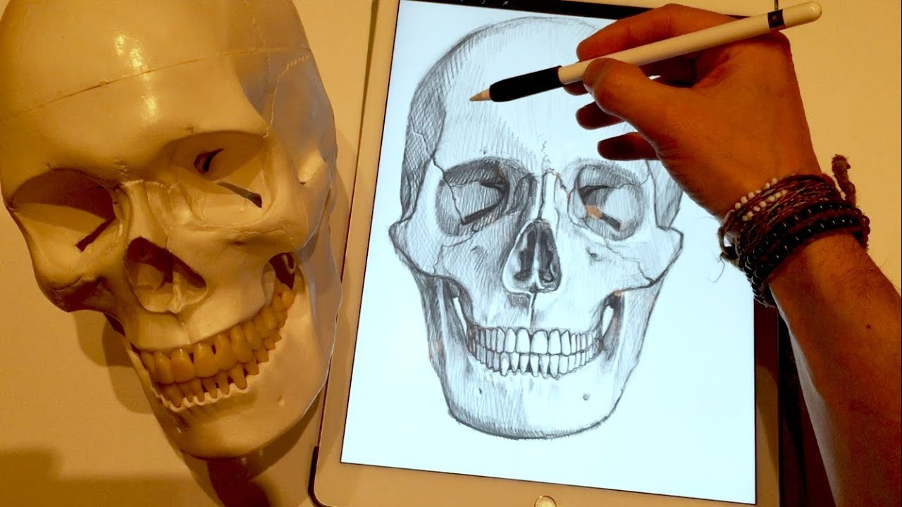 HOW TO DRAW A SKULL, on iPad Pro with Apple Pencil - YouTube