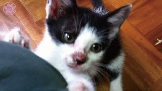 母猫のアマガミ教育「生後49日目」子猫がかわいい仔猫を産みました! ...