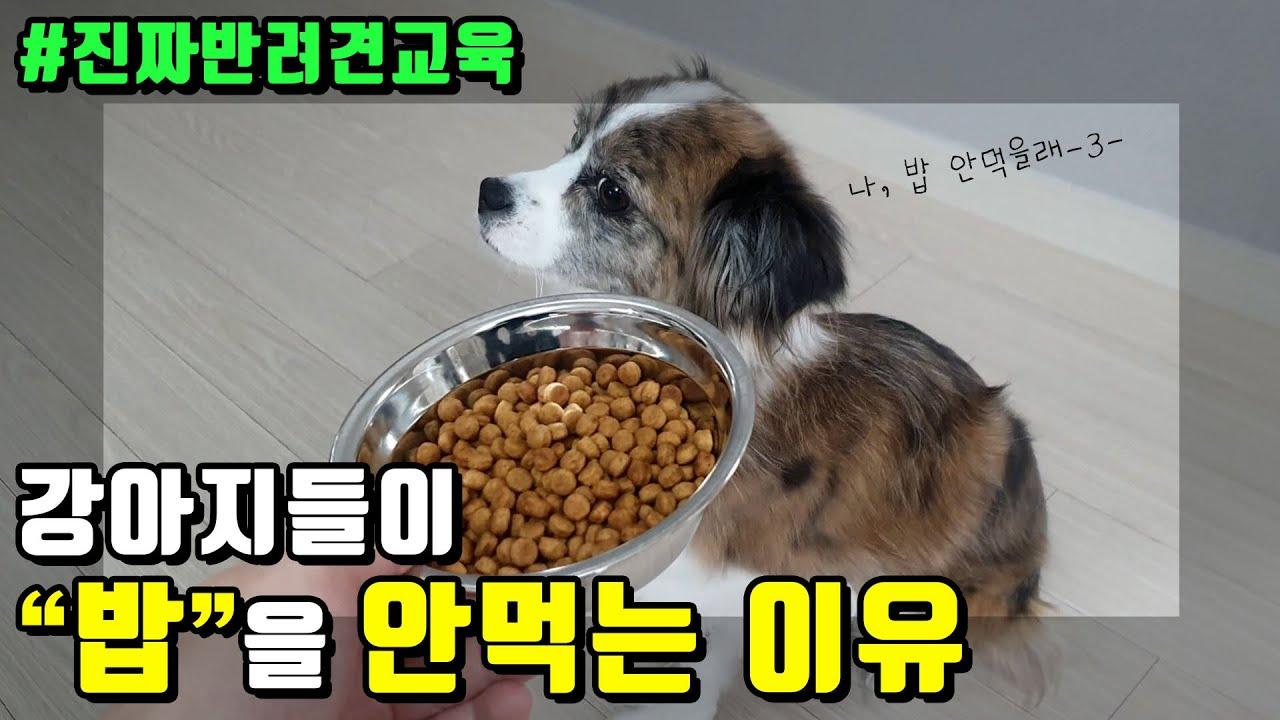 우리 강아지가 사료를 잘 먹지 않는 이유!!