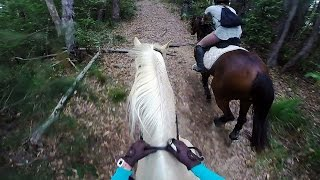 come for a trail ride with me   02 09 15