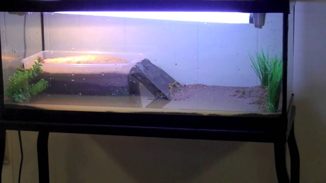 Building a small spotted turtle tank. - YouTube