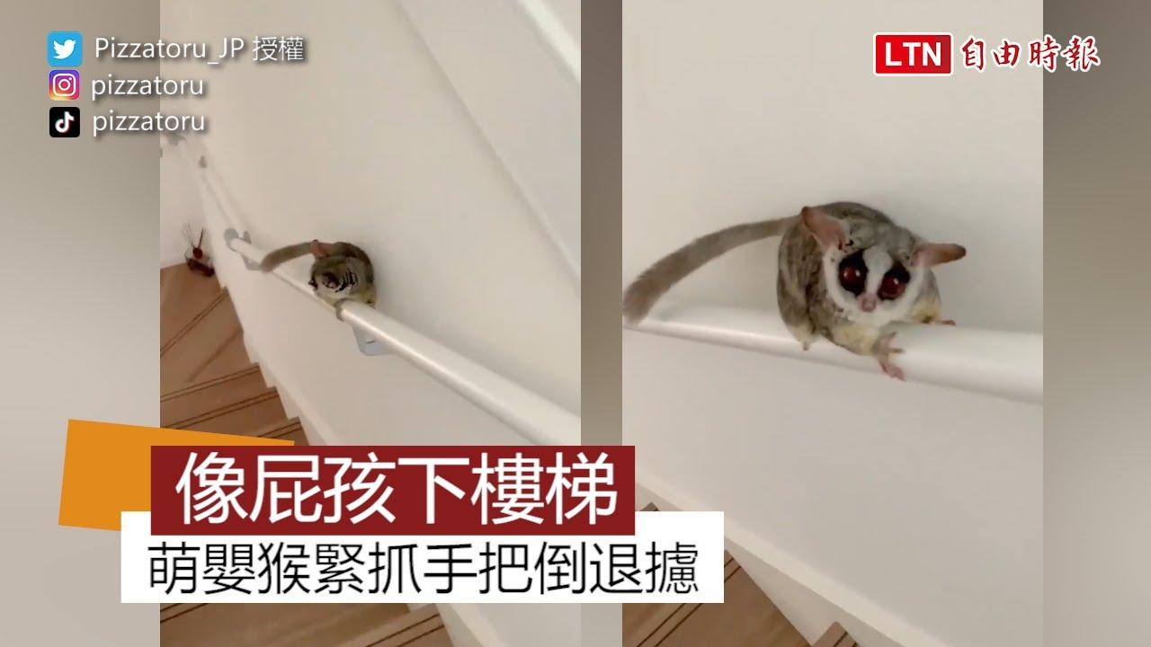 萌嬰猴趴臥樓梯手把倒退攄 網友笑稱:「下樓方式根本人類小屁孩!」