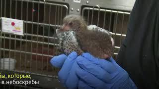 Как в Нью-Йорке спасают птиц