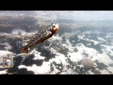 Como Pican Los Peces La Carnada Bajo El Agua