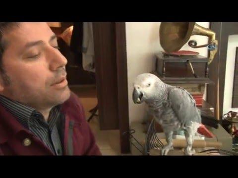 Sur'da Psikolojisi Bozulan Papağan Terapi Görüyor