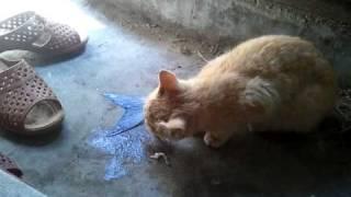 ニャムーといいながら魚を食べる猫のきのこ。