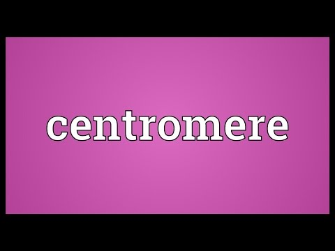 Centromere Meaning