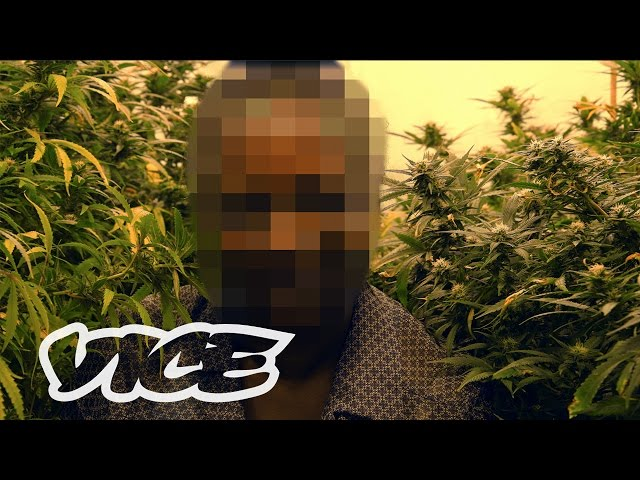 How Weed Laws Are Failing the UK | High Society