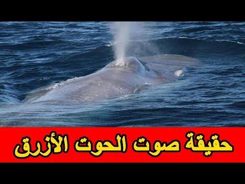 حقيقة صوت الحوت الأزرق ولماذا تم سماع الصوت في مصر وليبيا فقط Youtube