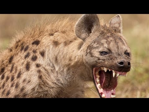 Original Owner Surprises HYENA on its 4 year old birthday! 🐾