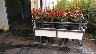 Róże. RedNaomi, Zautomatyzowana szklarnia. By