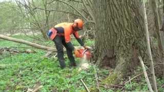 Extrembaumfällung Hybridpappel