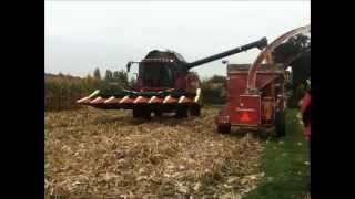 Mais oogsten voor korrels