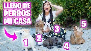 NUEVOS CACHORROS FRENCHIES! 🔥 Reacción de mis Perros a los Nuevos Integrantes 😱 El Mundo de Camila 🔥