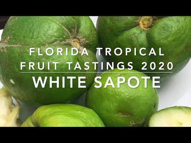 Florida Tropical Fruit Tastings 2020 -  White Sapote