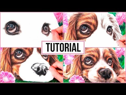 how-to-draw-a-realistic-dog-in-coloured-pencil-|-drawing-tutorial-step-by-step