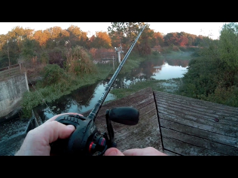 Secret Snook And Bass Fishing In Tampa