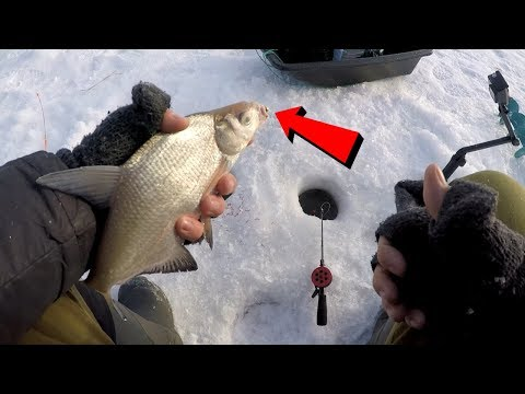 Ловля леща зимой на незнакомом водоеме | Зимняя рыбалка | Ice fishing