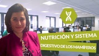 Nutrición y sistema digestivo de los mamíferos - Biología - digiSchool
