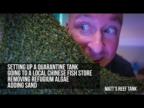 QUARANTINE TANK, ALGAE MANTENANCE | MATT's REEF TANK