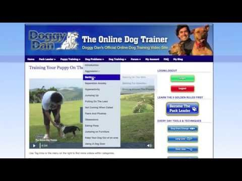 the-online-dog-trainer-review-|-solve-all-your-dog-and-puppy-problems-now.