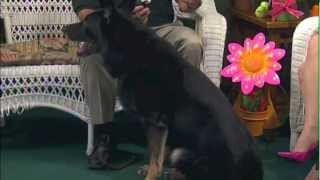 Usa K9 Harry Lozada & Arko On Pet Talk Cablevision News 12