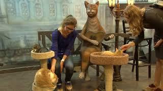Приют для кошек. В Петербурге раздали Эрмитажных котов.