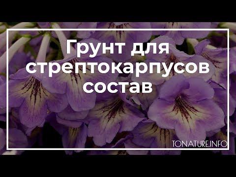 Грунт для стрептокарпусов состав | toNature.Info