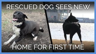 Rescued Dog Sees New Home For The First Time
