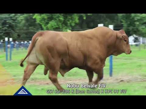 LOTE 102   NOBU BELVALE