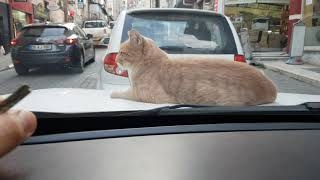 Do you mind if I drive my car? (Funny cat video)