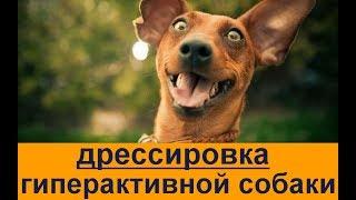 гиперактивная собака Дрессировка. Самые важные упражнения Гиперактивная собака -