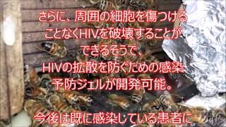ヘルペス 脳炎 メリチン 蜂針治療 東京 新宿