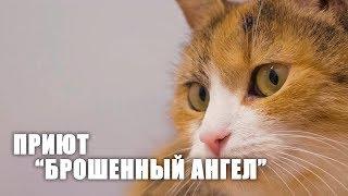 """Поездка в приют """"Брошенный ангел"""" в СПБ ¦ Преданные животные"""
