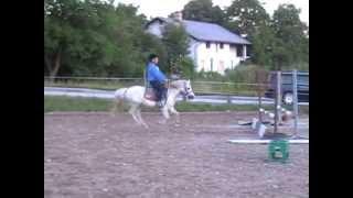 Pony Zu Verkaufen Welsh Bb