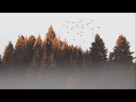 RELAXING, MOTIVATION MUSIC - ORMANIN DERİNLİKLERİNDEN KUŞ SESLERİ TAM 1 SAAT