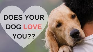 8 Ways to Know Your Dog Loves You