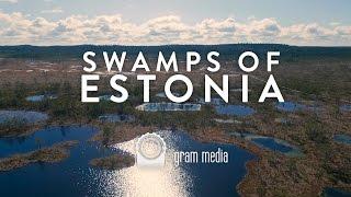 Roadtrip: Swamps of Estonia