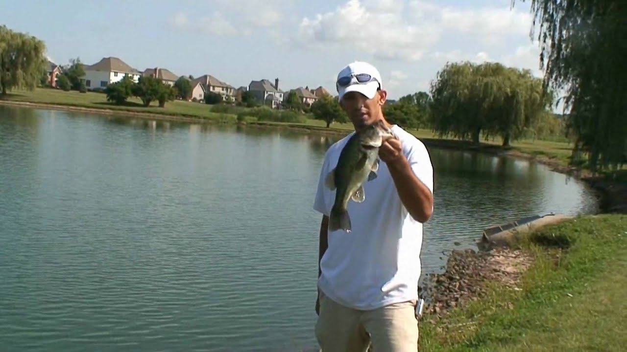 Bass fishing in ponds using creek chubs as bait youtube for Buy bass fish for pond