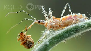 You Cant Unsee the Assassin Bugs Dirty Work | Deep Look