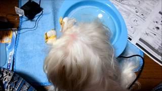今日も犬ネタですが、前から気になっていた超小型犬用ピュアクリスタル...