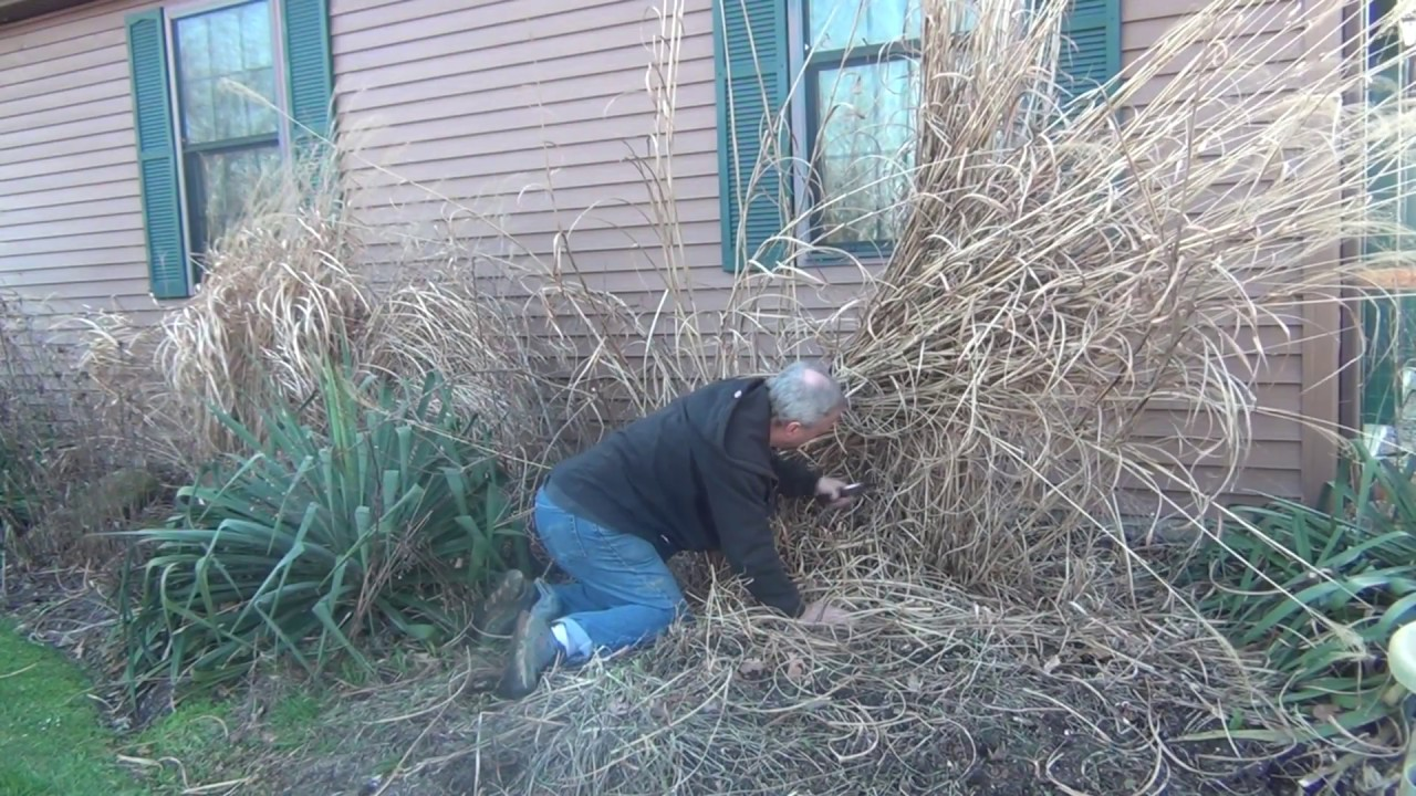 how to take care of ornamental grass in spring garden, Natural flower