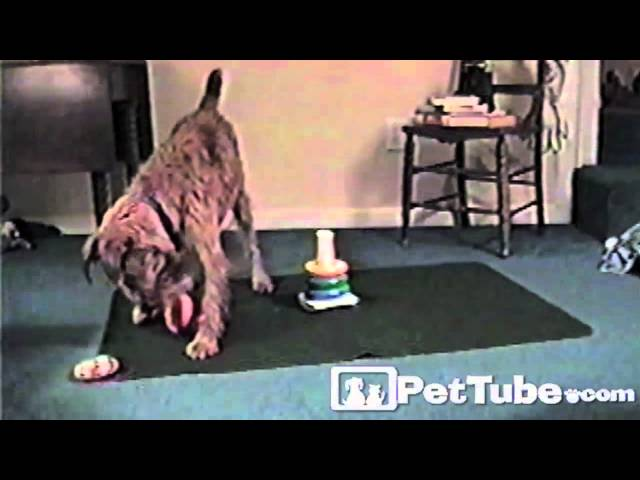 Guinness the Genius Dog- PetTube