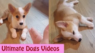 1 HOUR of Dogs Video || Ultimate Dogs Video