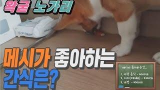 강아지가 가장 좋아하는 음식은 ☆☆이다? - 왁굳의 노가리
