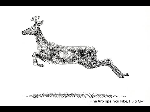 How to Draw a Deer - Elk - Reindeer - Moose