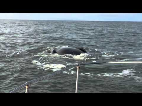 Fall Whaling