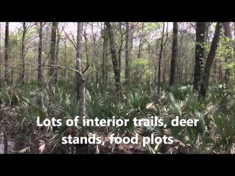 241 Ac Tensas Parish Louisiana Deer Hunting Land For Sale - Www.RecLand.net