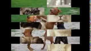Śmieszne zwierzaki !!!