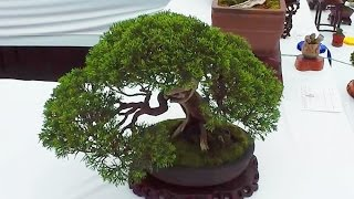The Worlds Largest Bonsai Tree Collection